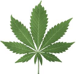 marihuana[1]