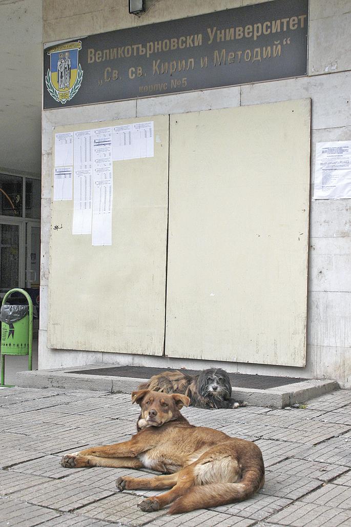 Улични кучета се препичат на слънцето пред Пети корпус на ВТУ. сн. Даниел ЙОРДАНОВ