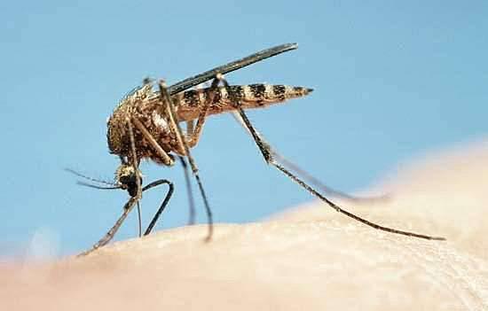 6-komari