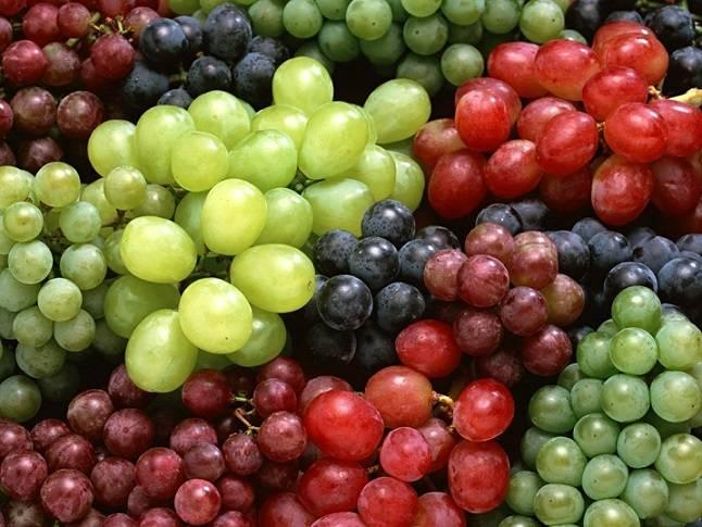 grozde1